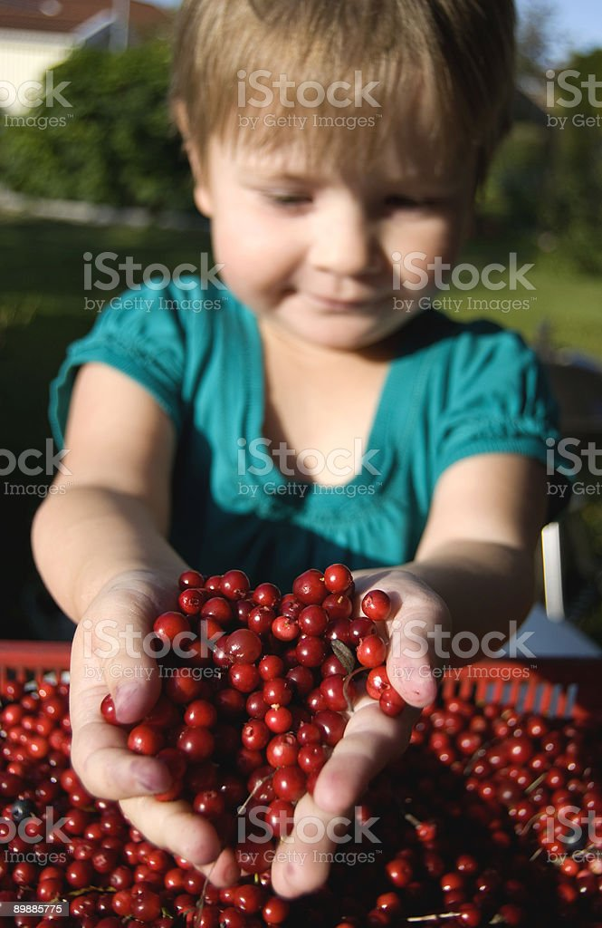 Girl with cowberries stock photo