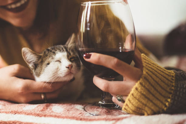 Girl with cute cat at home on Valentine's day Young woman with cat at home and glass of red wine kitten cute valentines day domestic cat stock pictures, royalty-free photos & images