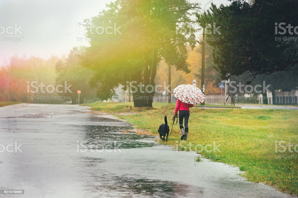 Girl with dog and umbrella in the rain stock photo