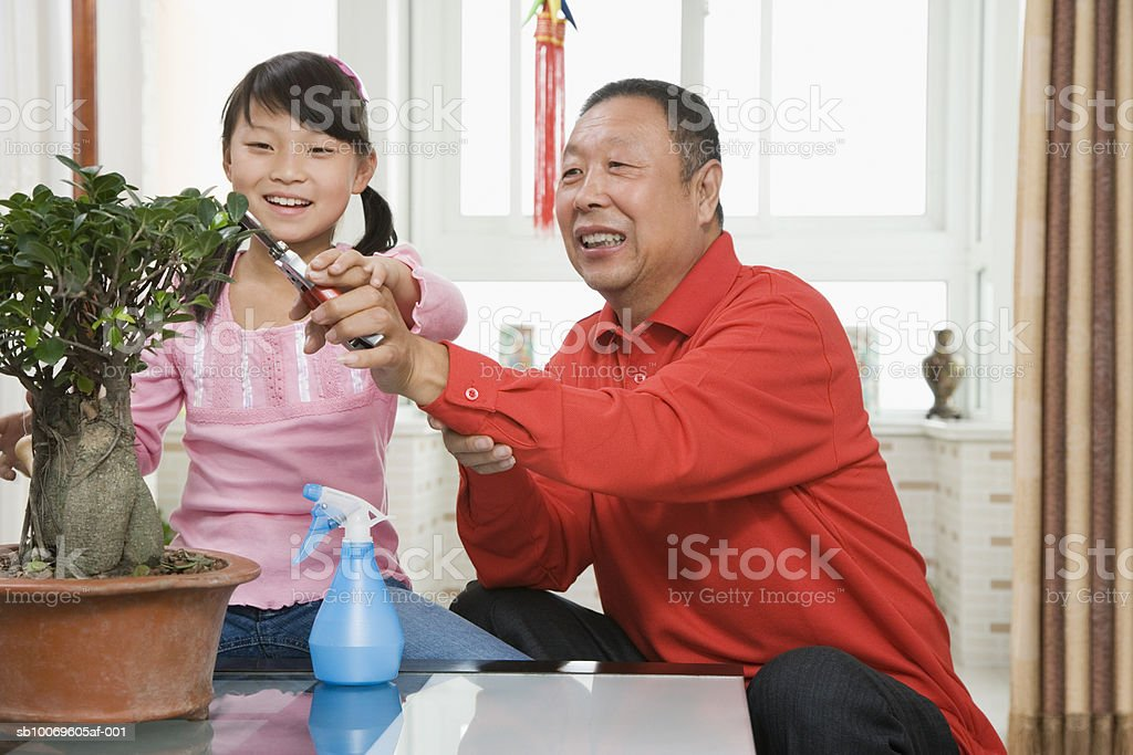 Girl (8-9) with grandfather pruning potted plant, smiling Lizenzfreies stock-foto