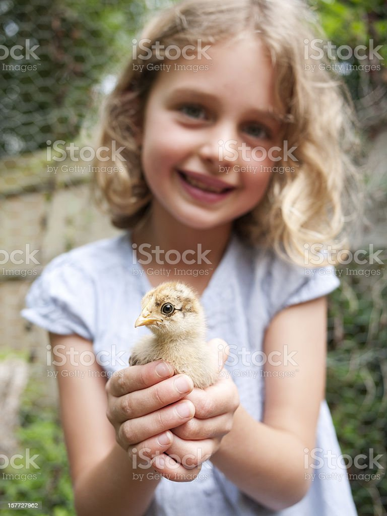 Girl with her bantam chick royalty-free stock photo