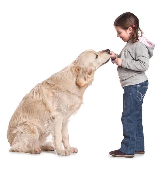 Mädchen mit Ihrem Hund golden retriever – Foto