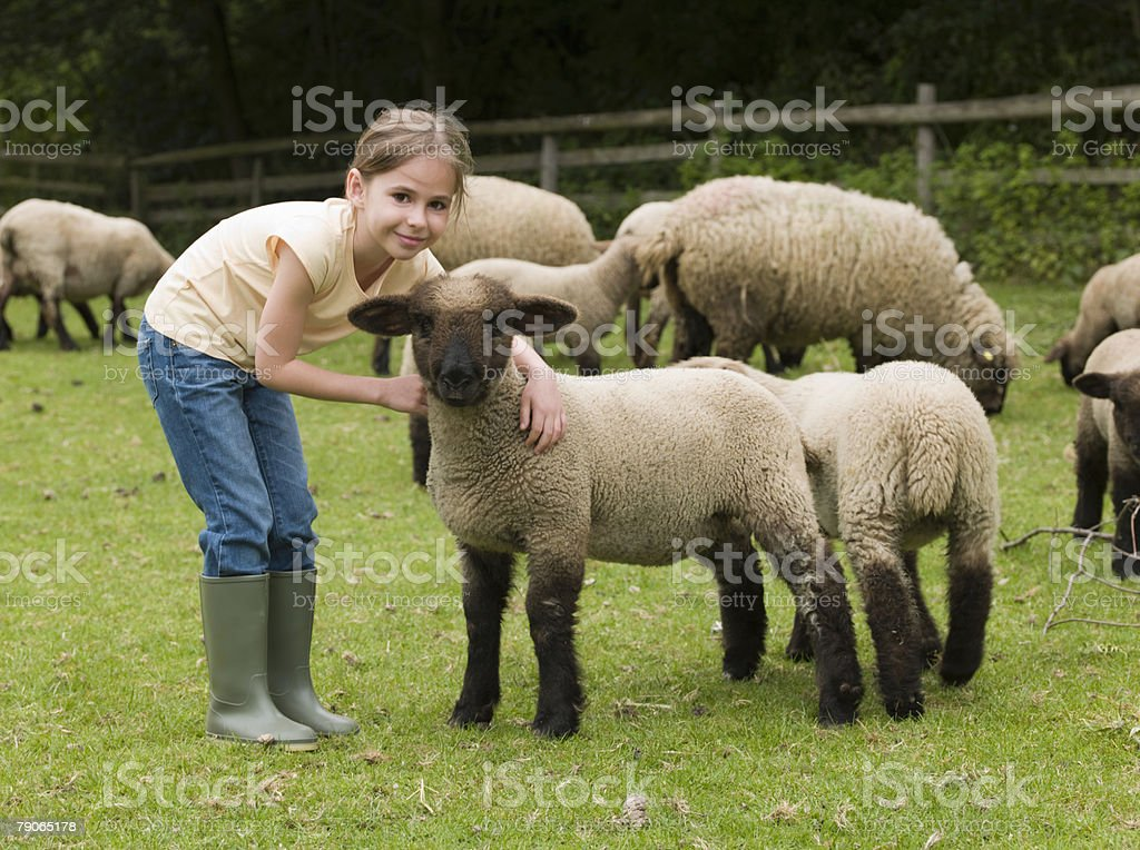 A girl with lambs royalty-free stock photo