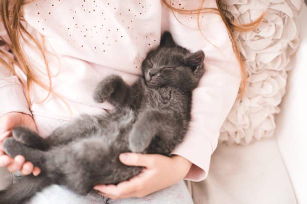 Girl with little kitten stock photo