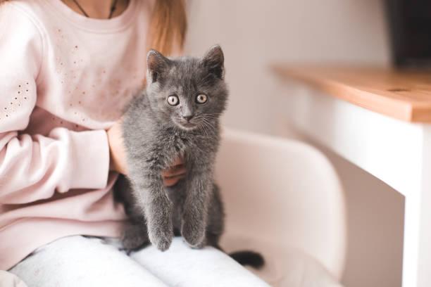 Girl with little kitten picture id1147391715?b=1&k=6&m=1147391715&s=612x612&w=0&h=xhvtdvxjiapwchalqmdfhquo1zhxx4cd1l7nac8hv20=