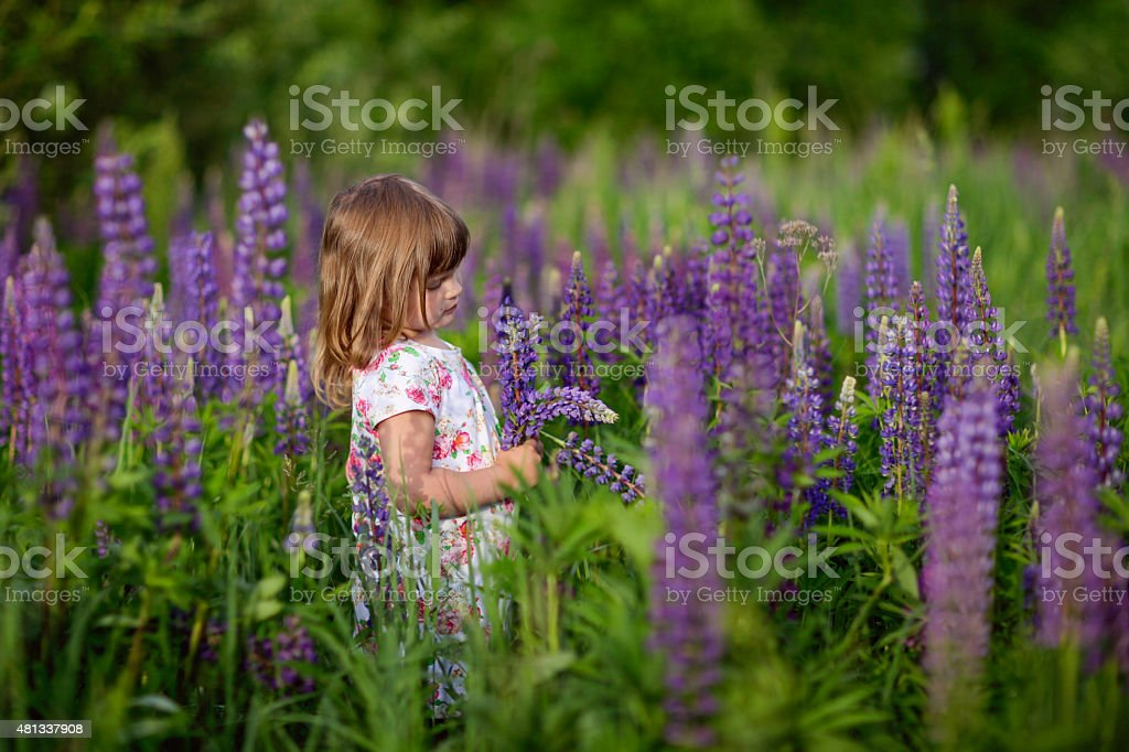 Girl with lupinus stock photo