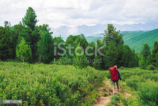 Girl with red large backpack go on footpath across green meadow to coniferous forest. Hiking in mountains. Traveler near conifer trees on summit. Mountain peaks away. Majestic nature of highlands.