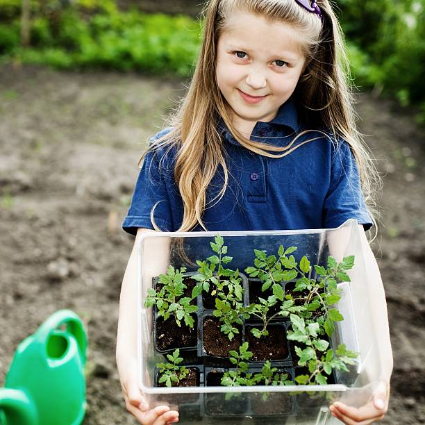 Girl with seedlings stock photo