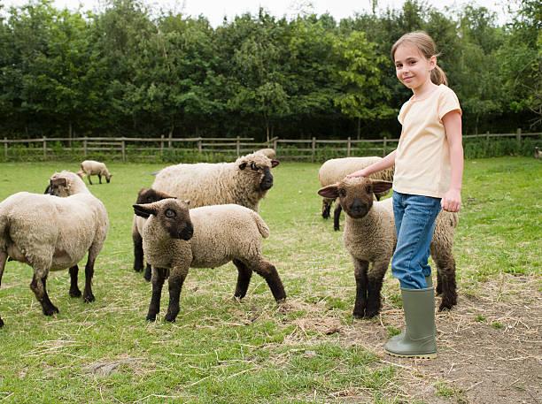 Une fille avec des moutons - Photo