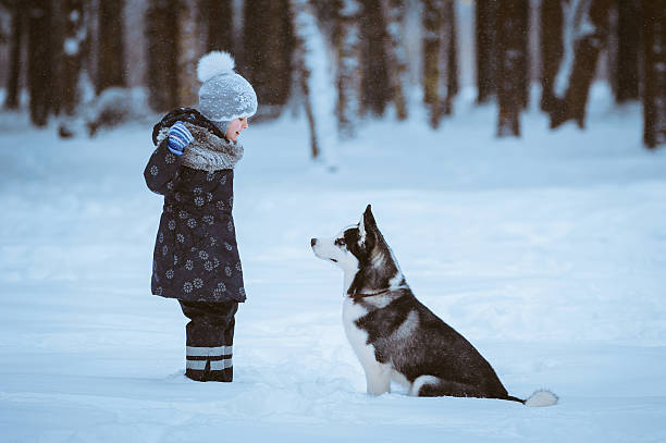 Girl with the dog Little girl with Husky dog on the snow, winter time husky dog stock pictures, royalty-free photos & images