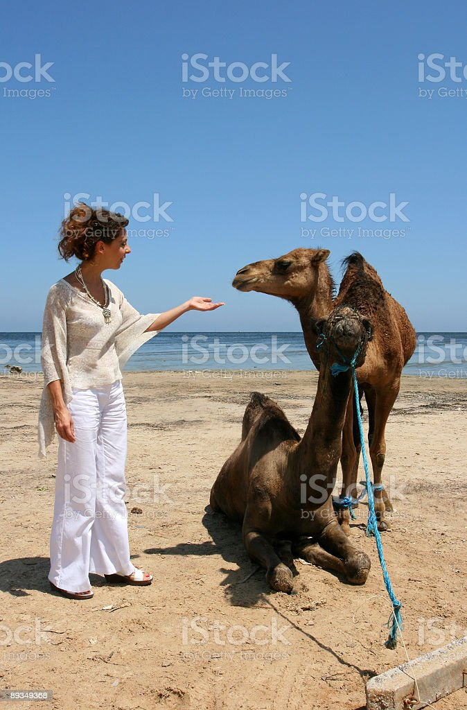 Girl with two camels in Tunisia-Africa royalty-free stock photo
