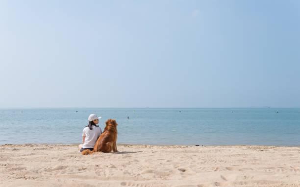 Golden Retrievers e meninas brincar na praia - foto de acervo
