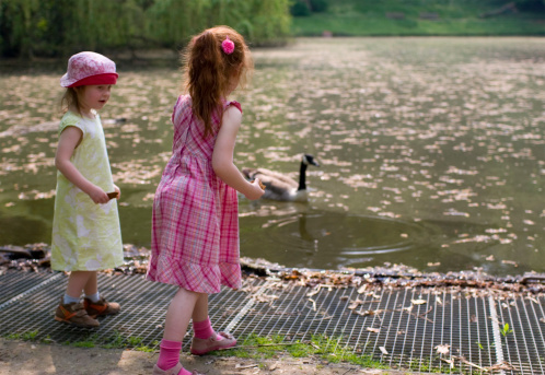 Girls At A Pond Feeding Goose Stock Photo - Download Image Now