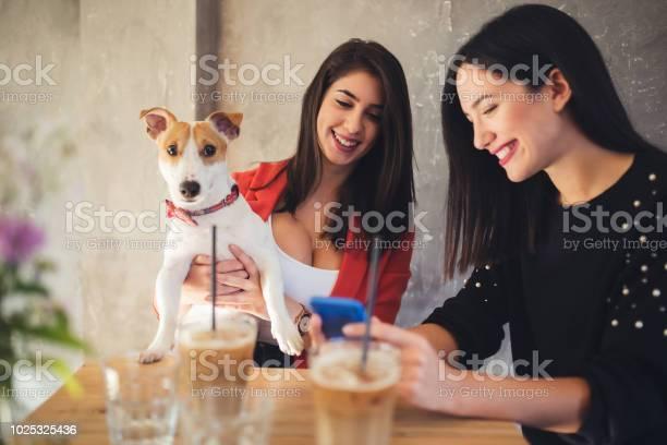 Girls enjoying in a cafeteria keeping puppy picture id1025325436?b=1&k=6&m=1025325436&s=612x612&h=l0q2wlbomh611xxmqxnolo cu9 tsqt7f2hfi gfi0g=