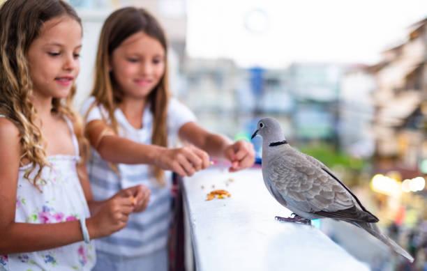 Girls feeding bird picture id1158060493?b=1&k=6&m=1158060493&s=612x612&w=0&h=fnfcyzgln jmvvyb0nbgsofmoxeq12itwhfybzcmjdw=