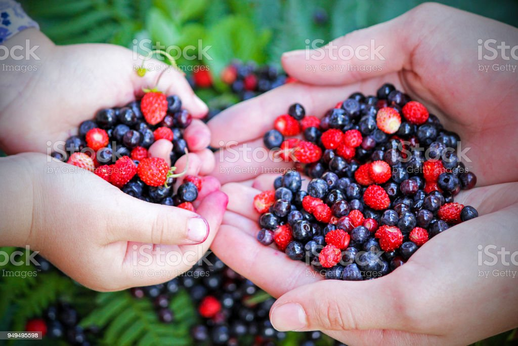 Girls holding forest berries in open palms, close up. Fresh vegan food. stock photo
