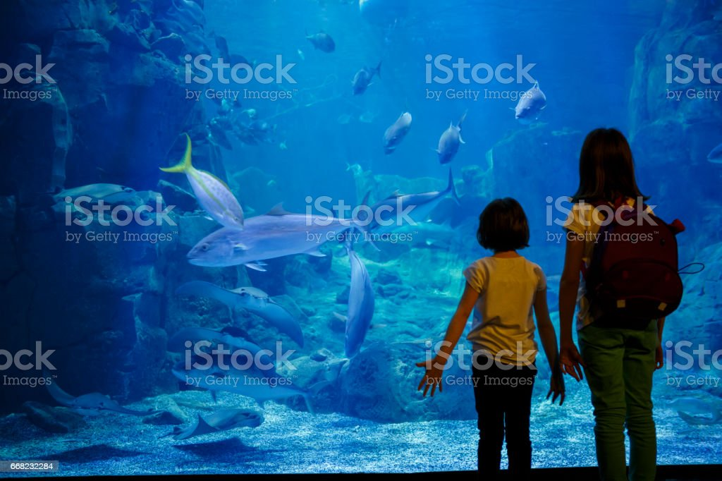 Girls looking at the fish in a big aquarium stock photo
