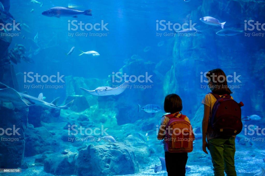 Chicas mirando los peces en un acuario grande - foto de stock