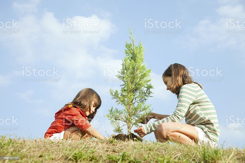 Girls planting tree stock photo