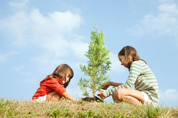 Girls planting tree stock photo