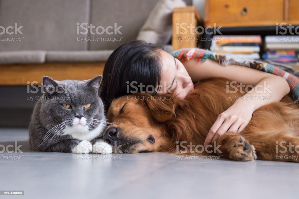 Meninas dormircom com cães e gatos - foto de acervo