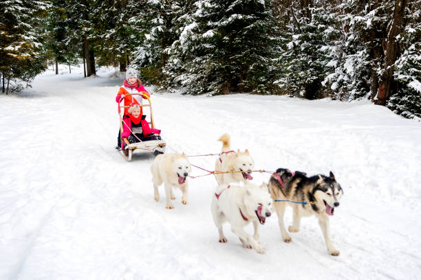 Girls Winter Husky Team Husky dogs are pulling sledge with two young girls at winter forest in Poland. working animal stock pictures, royalty-free photos & images