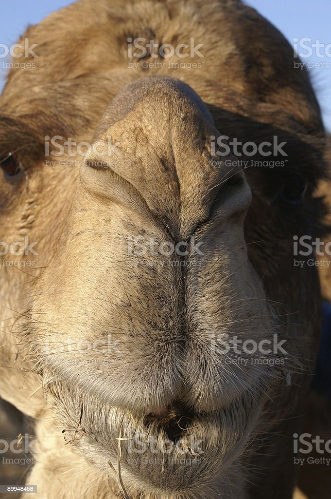 Give me a kiss! royalty-free stock photo
