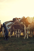 Shot of a female farmer pretending to kiss one of her cows in a field