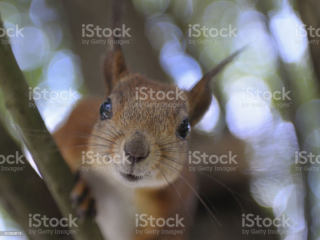 Give nuts royalty-free stock photo