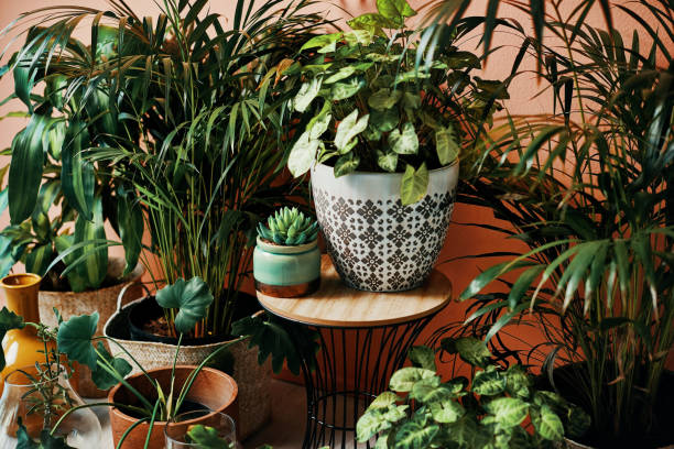 Give your home a good dose of greenery stock photo