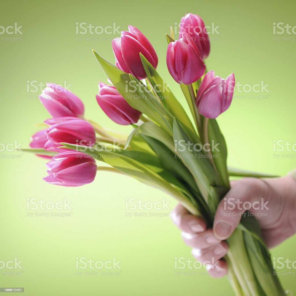 Giving pink tulips royalty-free stock photo