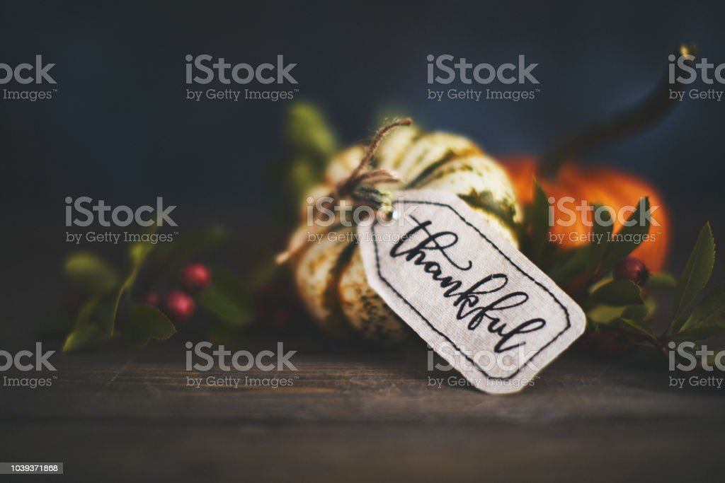 Giving thanks with pumpkin assortment still life and thankful message stock photo