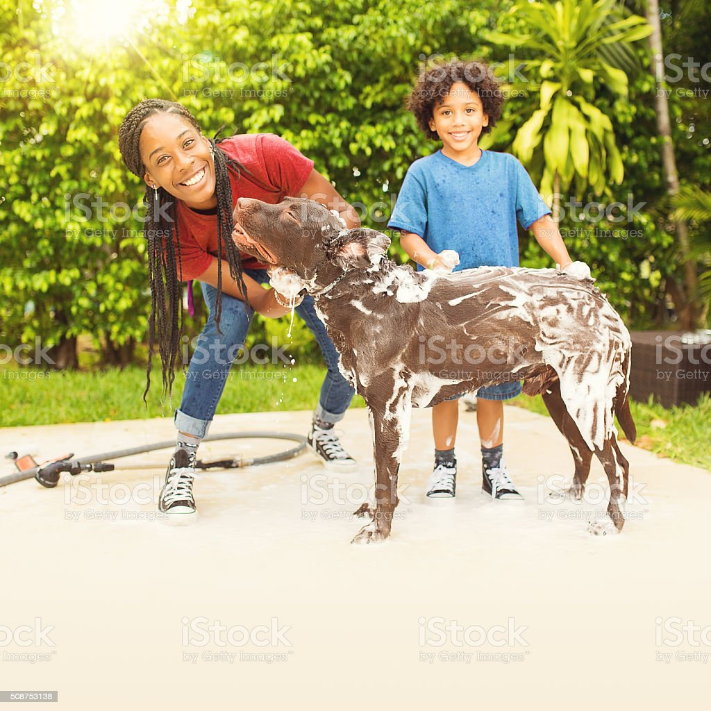 Giving The Dog A Bath And Having Fun Stock Photo