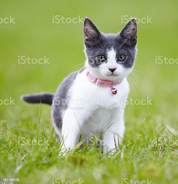 Giving you a feline stare picture id181138125?b=1&k=6&m=181138125&s=612x612&h=wdxlgtf1fcalpppxwbqtpmnx6 iuk gnvduo1psqv3u=