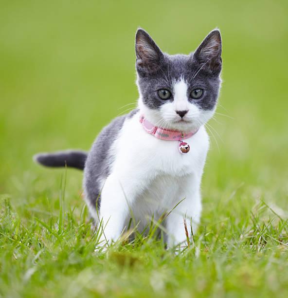 Giving you a feline stare picture id181138125?b=1&k=6&m=181138125&s=612x612&w=0&h=lcavtohancpcxnunbxyswdeiq78qk1vvxlnhdaqkz6u=