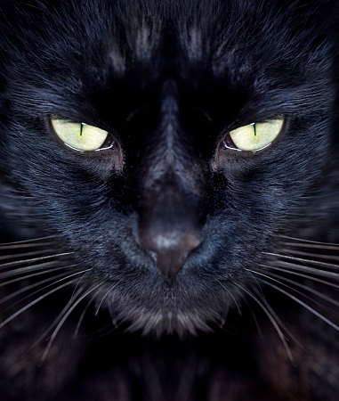 Cropped view of a black cat looking at youhttp://195.154.178.81/DATA/shoots/ic_781658.jpg