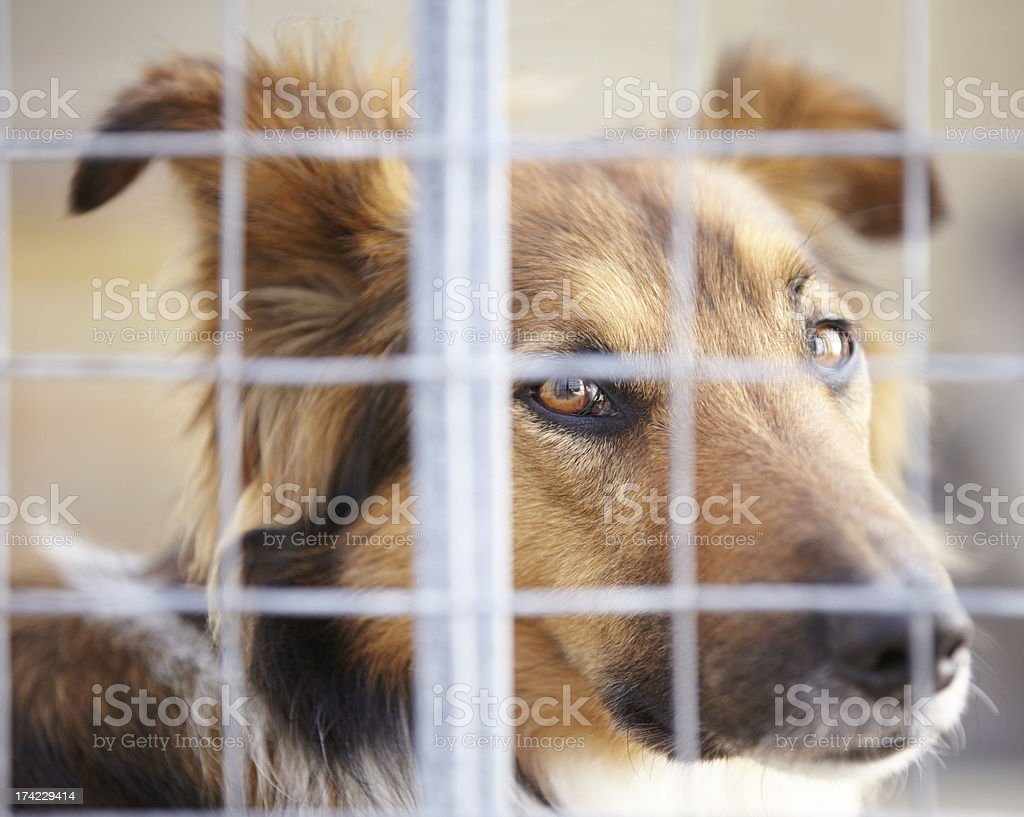 Giving you those puppy dog eyes stock photo