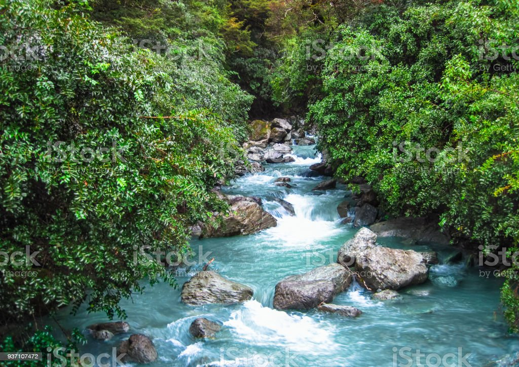 Glacial Stream Flowing Through Dense Forest in New Zealand stock photo