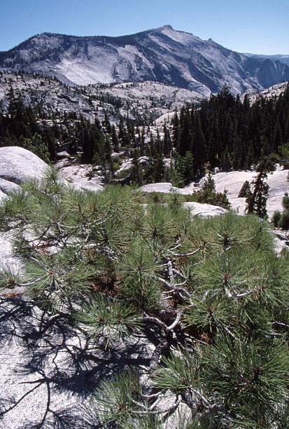 Glacial terrain scenery stock photo
