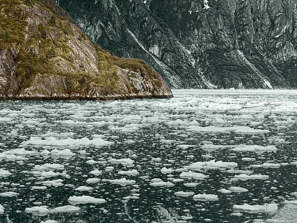 glacier bay national park, alaska, usa - alaska us state stock photos and pictures