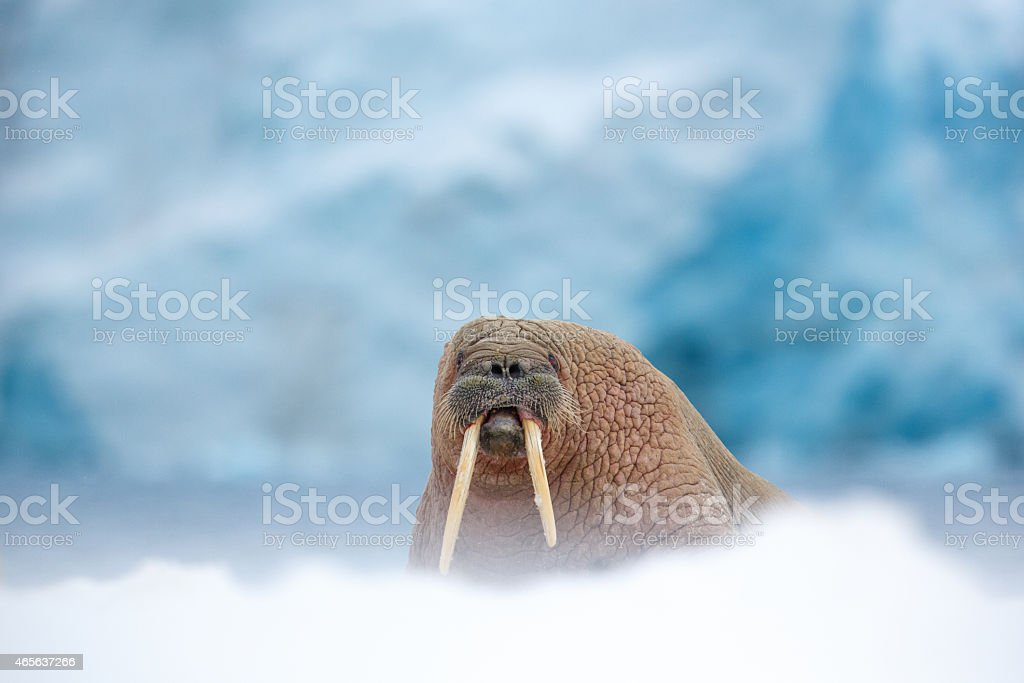 Glacier boss stock photo