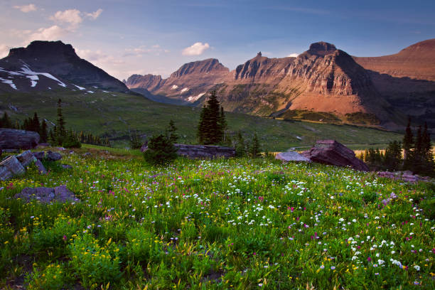 glacier national park - in the backcountry - logan pass stock pictures, royalty-free photos & images