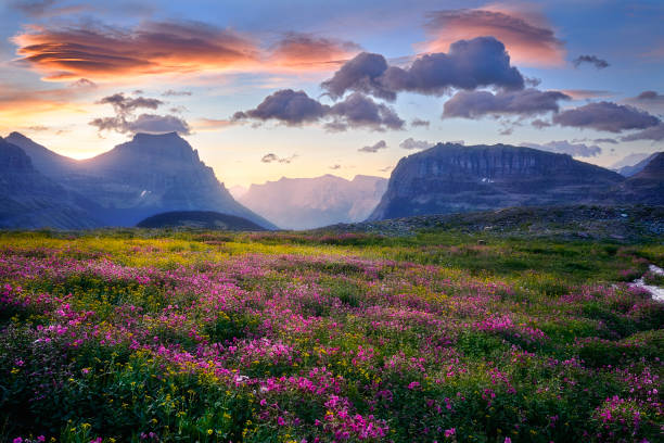 Glacier National Park - Lenticular Dawn 2 Soft morning light fills the meadows and the meadows come to life in the areas surrounding Logan Pass inside Glacier National park, Montana USA lenticular cloud stock pictures, royalty-free photos & images