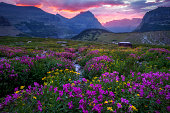 istock Glacier National Park - Meadow In Bloom Going To The Sun 1196085928