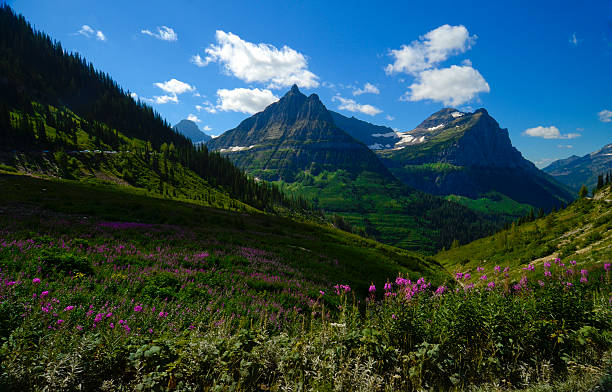 glacier national park mountains - british columbia glacier national park stock pictures, royalty-free photos & images