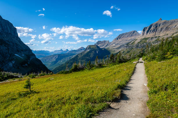 glacier national park - logan pass stock pictures, royalty-free photos & images