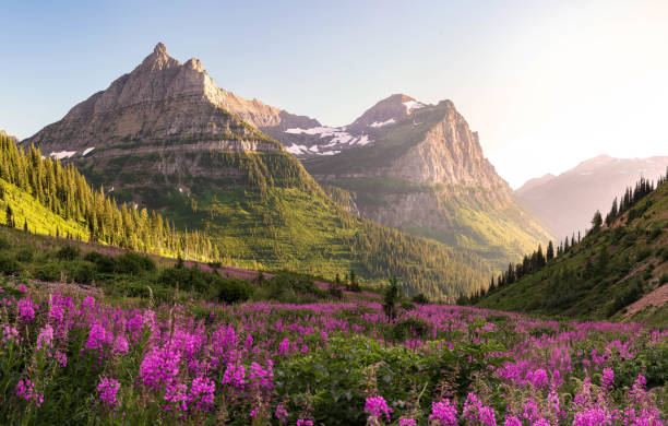 glacier national park - mountain range stock photos and pictures