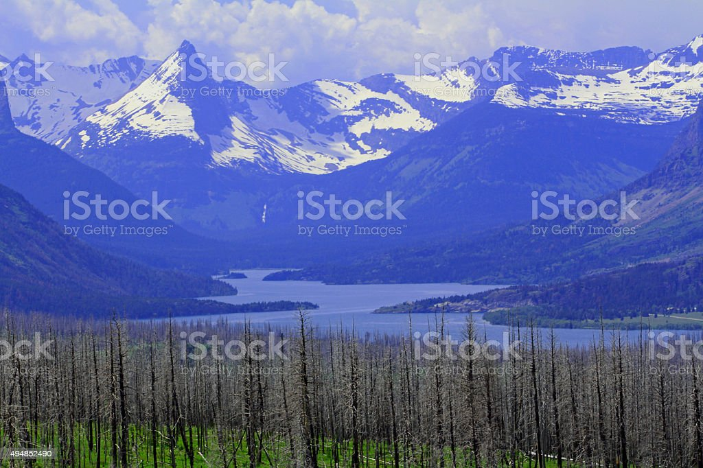 Glacier NP - Lake - Forest stock photo