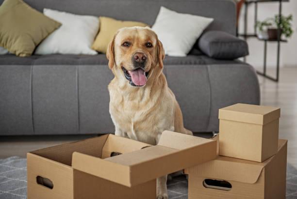 Glad animal companion locating near open packages picture id870589140?b=1&k=6&m=870589140&s=612x612&w=0&h=k8ly3sjjn5gxtt3hxhyybjjrjckvqgnrdxsdrmfp24o=