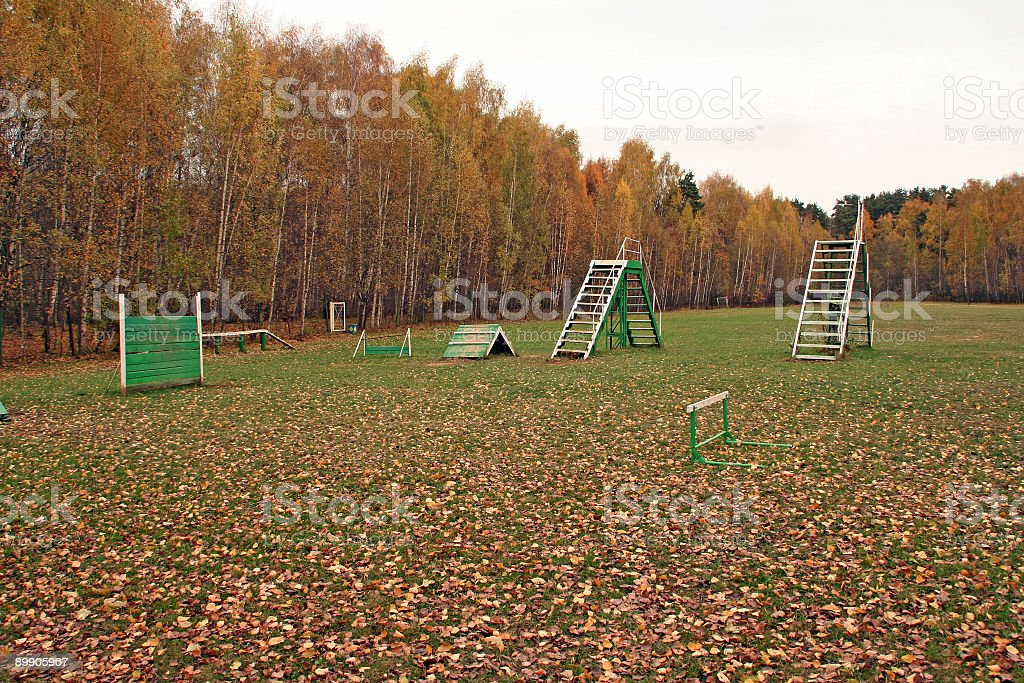 Glade for trainings with dogs royalty-free stock photo